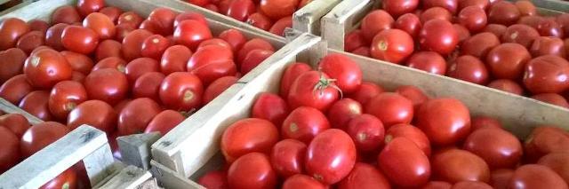 Il Rosso siccagno è un pomodoro veramente interessante, oltre che per la tradizione legata alla sua lavorazione, anche sotto il profilo organolettico e nutrizionale...