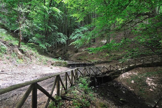 Un sentiero nel Bosco di Malabotta