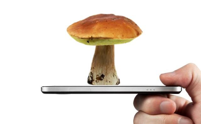 Ci sono molte app che possono essere usate per riconoscere i funghi, le zone dove cercarli...