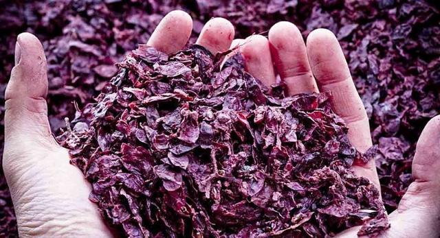 I chicchi d'uva sono ricchissimi di sostanze che aiutano l'epidermide