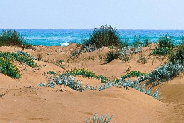 La tipica vegetazione sulle dune della Riserva della Foce del fiume Belìce
