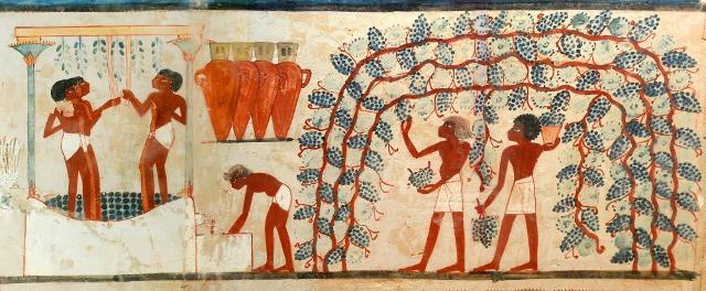 I viticoltori egizi adottavano forme di coltivazione a pergola, così come venne poi fatto in Italia.