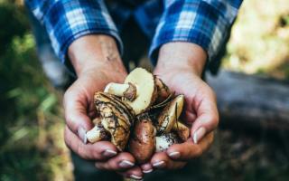 Un prontuario e tre app per andare a funghi in tutta sicurezza