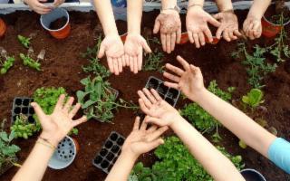Palermo diventa un Orto Urbano per insegnare a mangiar sano