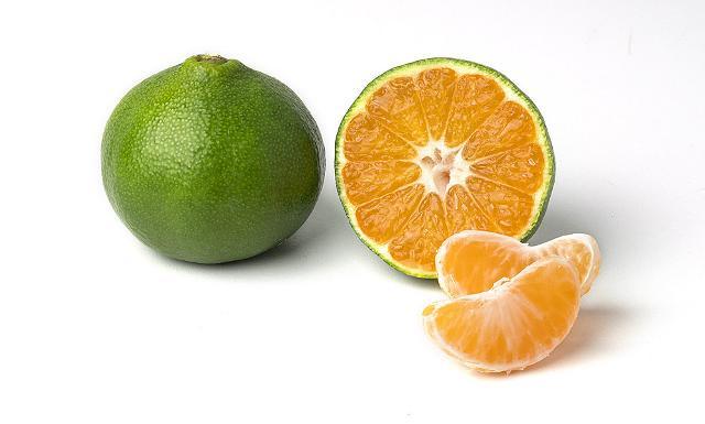 Il mandarino Miyagawa è un agrume di origine cinese