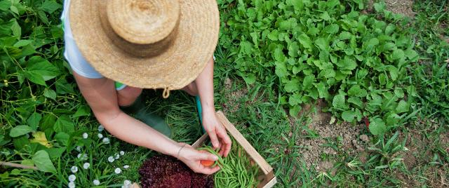 In Italia più di un'azienda agricola su quattro è guidata da donne