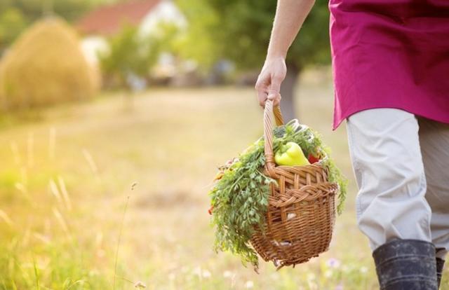 È fondamentale il contributo femminile all'agricoltura per lo sviluppo sostenibile dell'agroalimentare...