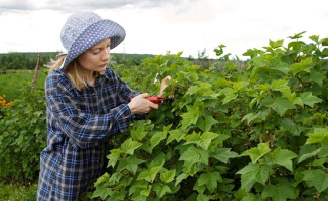 Le donne in agricoltura sono un valore aggiunto che va sostenuto con adeguate risorse economiche e politiche.