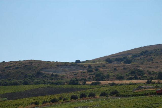 Il Bosco di Angimbè, infatti, custodisce buona parte della biodiversità siciliana, dalla flora alla fauna