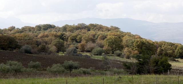 Cozzo Finocchiaro, Baucina - Bosco di roverelle