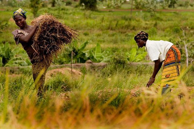 Donne al lavoro nei campi - Burkina Faso