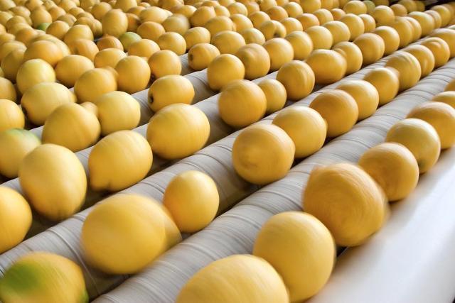 Lavorazione dei Limoni di Siracusa IGP