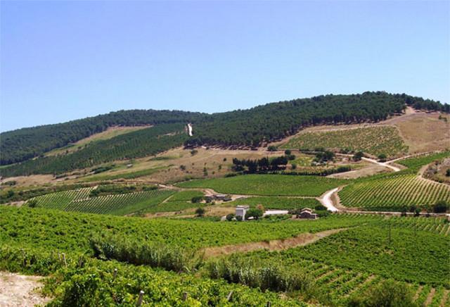 Monte Baronia con il suo rigoglioso bosco