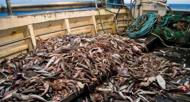 L'Italia non ha ancora avviato misure efficaci per tutelare le nurseries delle specie ittiche più importanti (gamberi bianchi e nasello), non rispettando nemmeno le raccomandazioni del Cgpm-Fao che era tenuta ad applicare