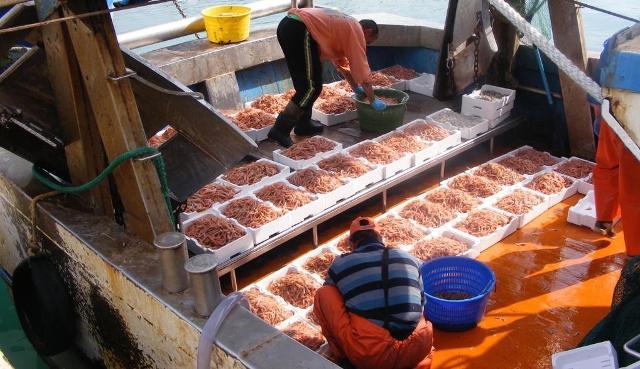 Greenpeace ha analizzato i dati del sistema di identificazione automatica (Ais) delle imbarcazioni: sono tutte imbarcazioni provenienti soprattutto dai porti di Mazara del Vallo, Sciacca, Porto Empedocle, Licata e Portopalo di Capo Passero...