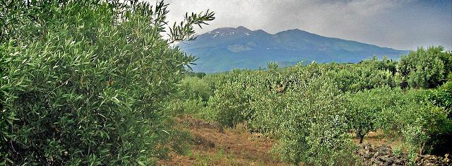 Attualmente sono 19 i comuni delimitati e ricadenti nell'areale DOP nelle province di Catania, Messina ed Enna
