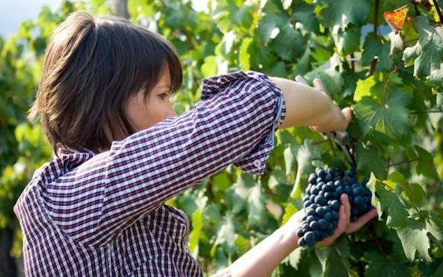 In Italia le aziende agricole sono sempre più rosa
