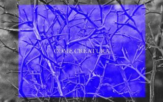 Come Creatura, di Francesco De Grandi