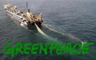 L'allarme di Greenpeace: ''In Sicilia troppa pesca a strascico''