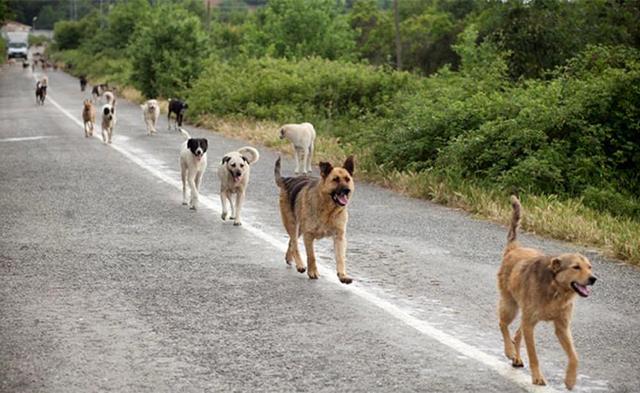 """Un branco composto da una decina di cani randagi ha causato la chiusura temporanea del sito archeologico delle """"Mura Timoleontee"""" di Gela"""