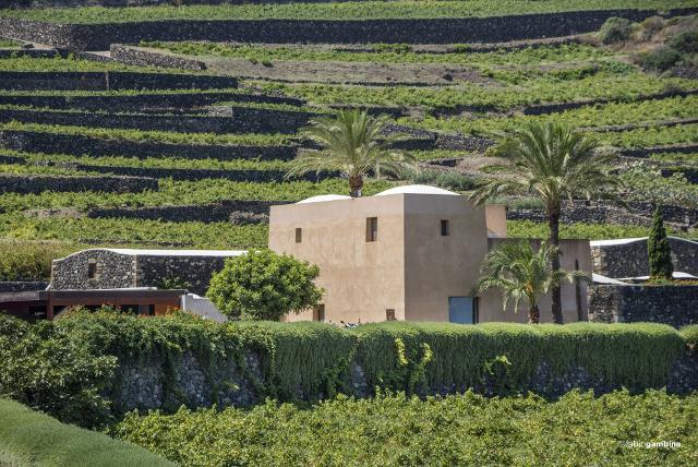 La cantina e le vigne Donnafugata a Pantelleria - ph Fabio Gambina