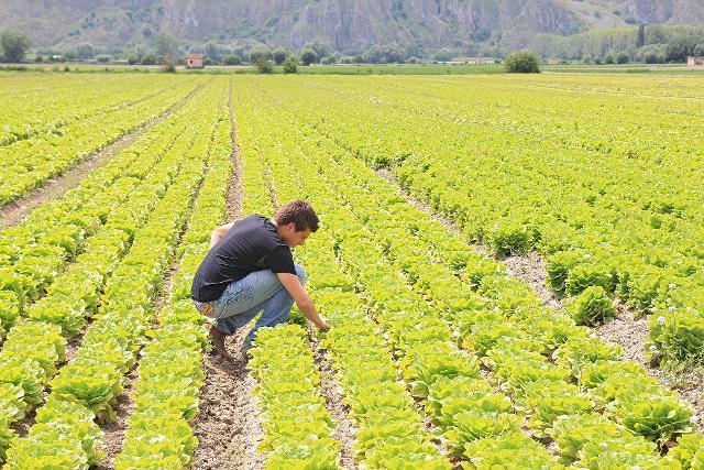 Le imprese agricole 'giovani' sono meno del 10% ma... crescono
