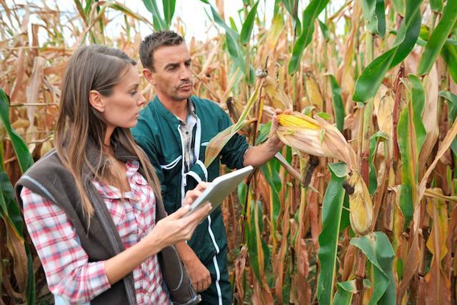 In Italia, le imprese agricole condotte da giovani fino a 35 anni, hanno produzioni a tre cifre e mediamente sono più strutturate e diversificate, grazie ad un approccio al mercato più innovativo e tecnologico