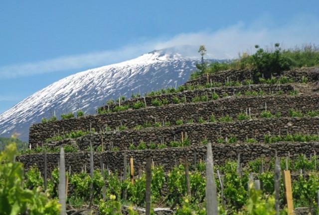 Muretti a secco di pietra lavica in un terrazzamento di vigne alle pendici dell'Etna