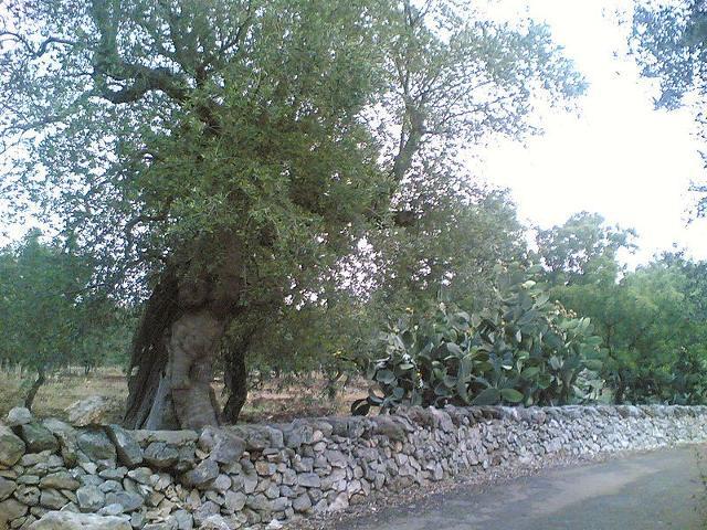 Muretto a secco in un tipico paesaggio campestre siciliano