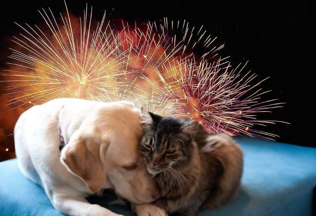 Superare la ''prova dei botti'' di Capodanno con i propri amici animali