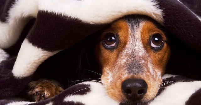 """I tradizionali """"botti"""" di Capodanno, oltre che a rallegrare l'atmosfera di festa, in genere rappresentano un forte disturbo per gli animali domestici destando in loro spavento ed agitazione..."""