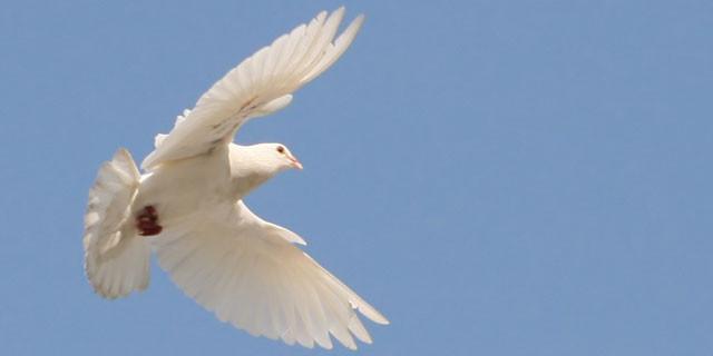 Il volo della colomba simboleggia la discesa dello Spirito Santo...