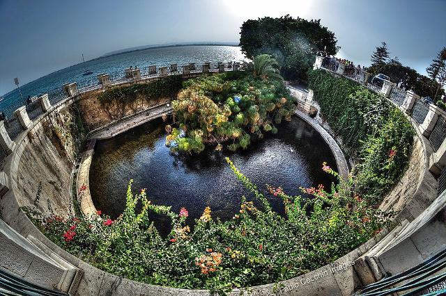 La Fonte Aretusa ad Ortigia - ph Fabio Cecchin