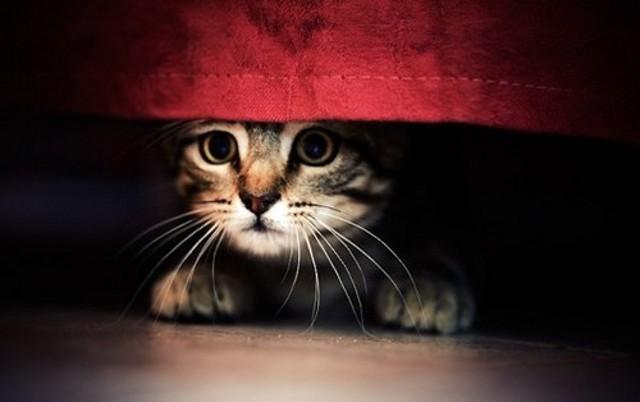 """Allo scoccare della mezzanotte, con l'inizio dei """"botti"""", per chi ha in casa degli animali domestici il momento di allegria si tramuta subito in ansia perché, 9 volte su 10, non si sa come reagire alle reazioni di spaesamento del proprio pet..."""