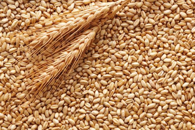 Il grano per la cuccìa