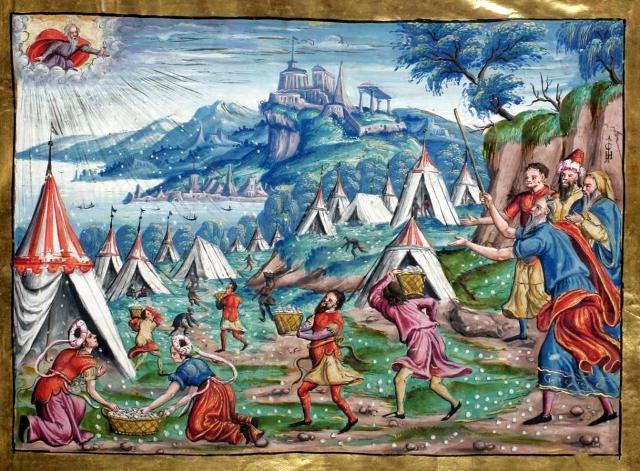 """""""Il popolo d'Israele raccoglie la manna caduta dal cielo"""", miniatura tratta da """"Canti a quattro voci per le principali festività dell'anno liturgico"""" (1562), Biblioteca dell'Abbazia di San Gallo, Svizzera."""