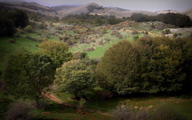 Il Sentiero degli Agrifogli Giganti di Piano Pomo, Madonie
