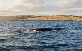 Whale Watching Weekend - Osservando le Balene