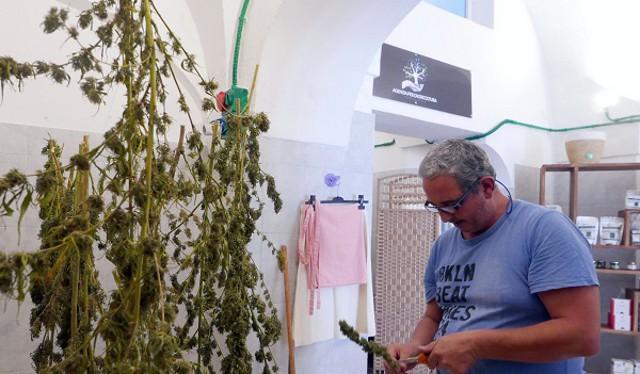 Fabio Farina lavora la canapa light prodotta dalla sua cooperativa a Pantelleria
