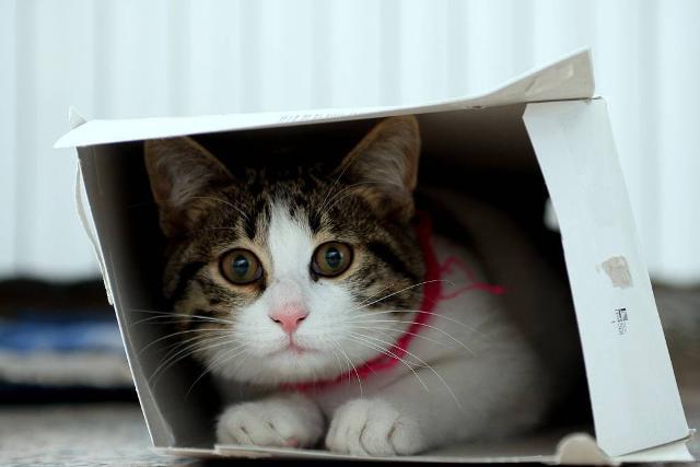 L'AIDA&A fornisce pochi e pratici consigli per coloro che hanno perso o ritrovano un cane o un gatto scappato e spaventato o ferito...