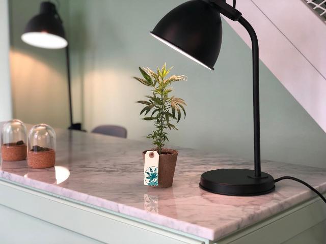 """""""Marishanti"""", il primo concept store del CBD, principio attivo della cannabis sativa che dona benessere al corpo e alla mente"""