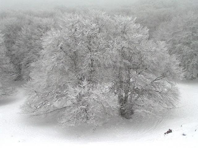 Piano Battaglia - L'albero della neve, ph giomodica