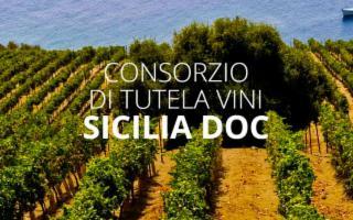 Grande successo dei vini Doc Sicilia in Cina