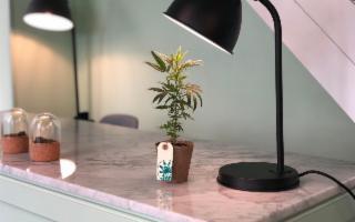 Il primo CBD concept store ''Marishanti'' parte da Ragusa