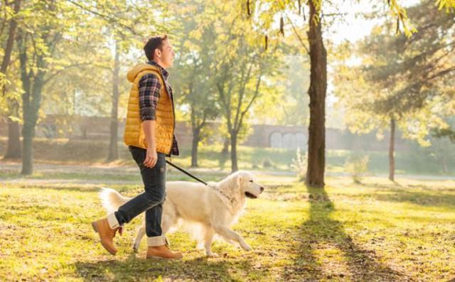 Quasi 6 persone su 10 affermano che è probabile che considerino una persona con un cane più attraente...