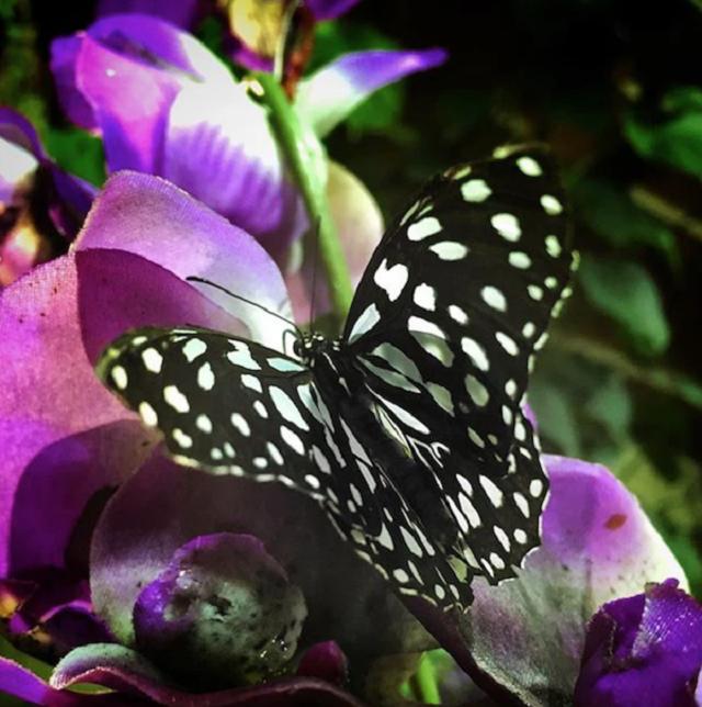 la-casa-delle-farfalle-un-paradiso-tropicale-urbano