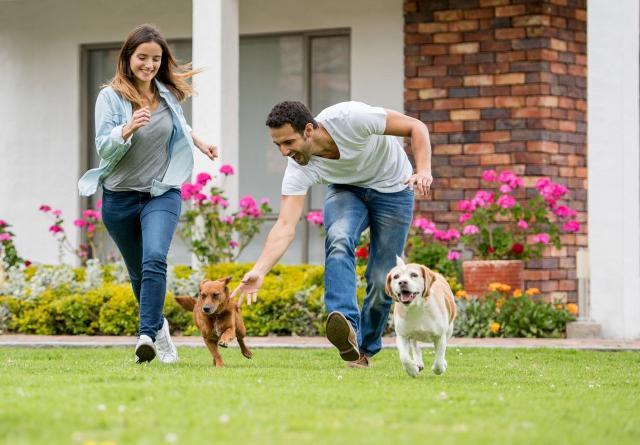 L'88% ritiene che i cani siano grandi alleati nell'incontrare nuove persone...