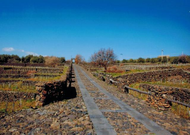 """Un viale attraversa il vigneto terrazzato, """"scolpito"""" nella pietra lavica, attorno al Castello di Solicchiata"""