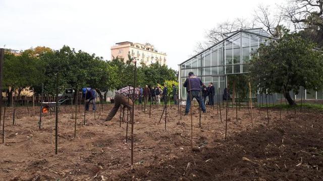 Le 195 viti portainnesto sono state piantate dai tecnici dell'Orto Botanico seguendo uno schema che riproduce i filari dei vigneti...
