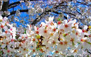 Il meraviglioso Festival del Mandorlo in Fiore